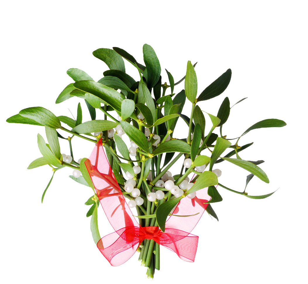 mistletoe therapy treatment for cancer