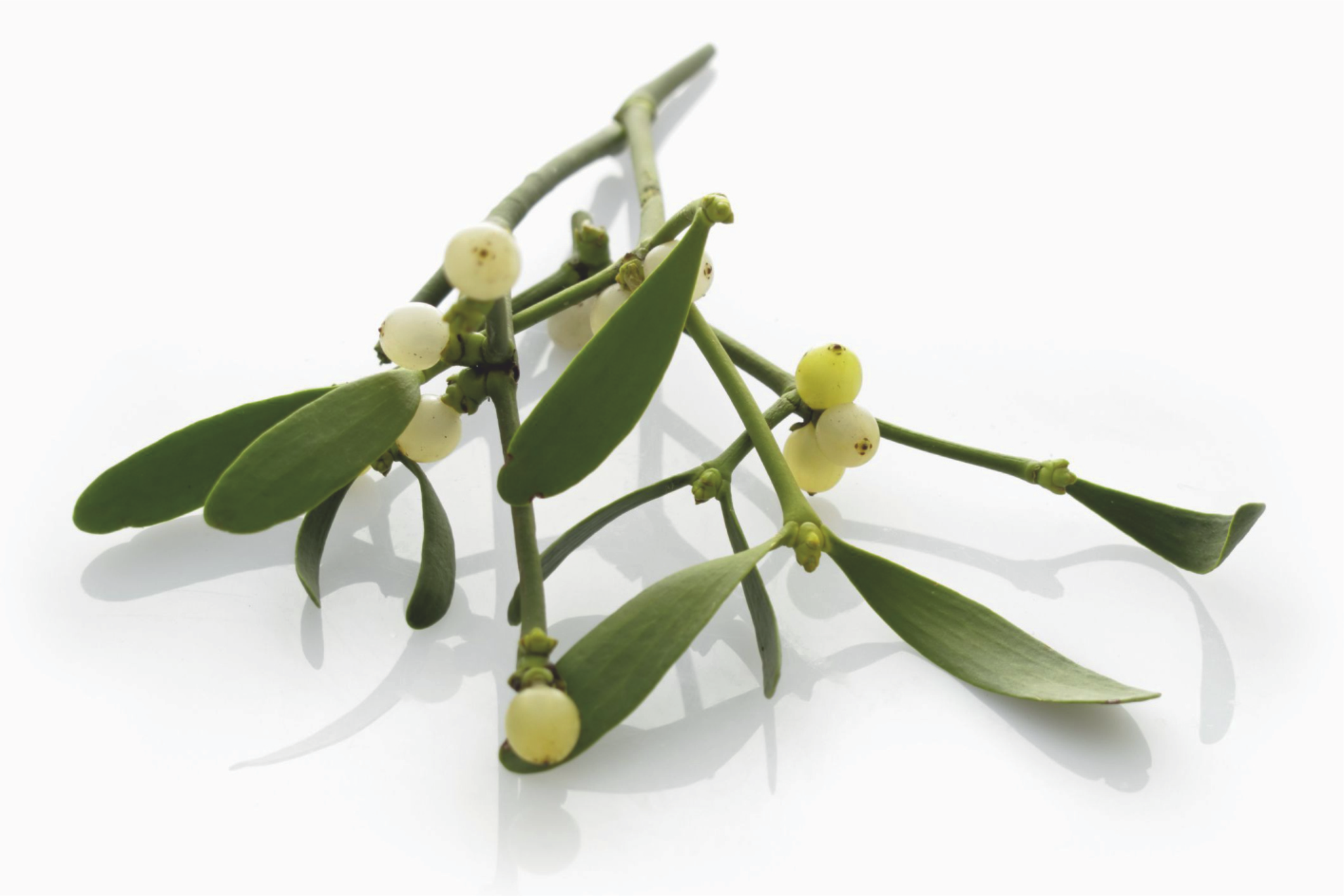 Cancer treatment mistletoe therapy
